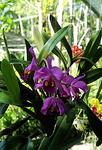 auf der Rundreise, orchidee