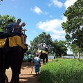 Exkursion, Tagestour Elefant, Rundreise Sri Lanka