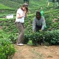 Ausflug, Teeplantagen